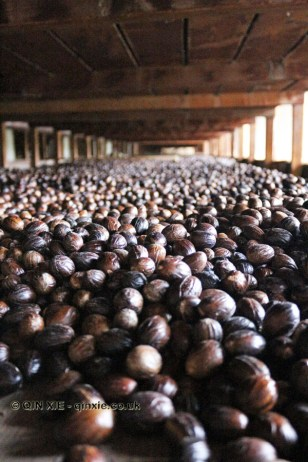 Nutmeg drying, Gouyave nutmeg factory, Grenada