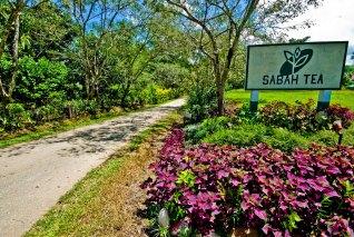 sabah-tea-garden1