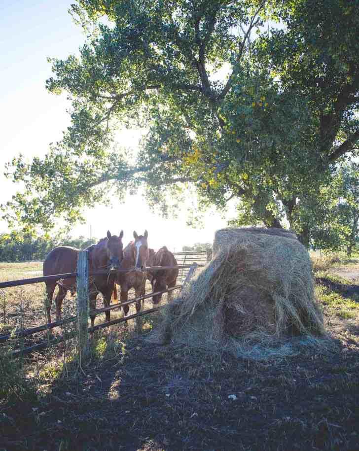 Kansas Farms #farmfoodtour