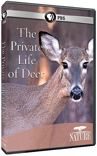 PBS The Private Life of Deer Documentary