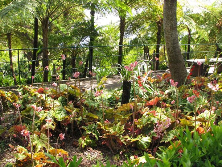 291117_Funchal_cote_jardin_24