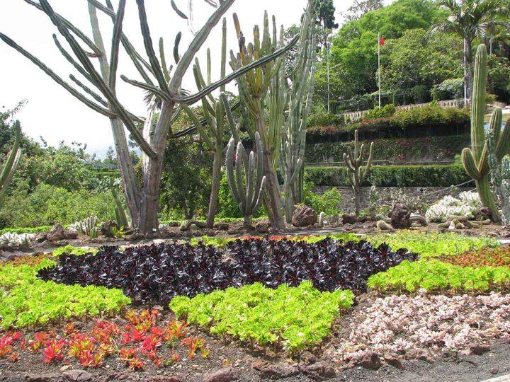 291117_Funchal_cote_jardin_31