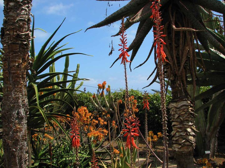 291117_Funchal_cote_jardin_32