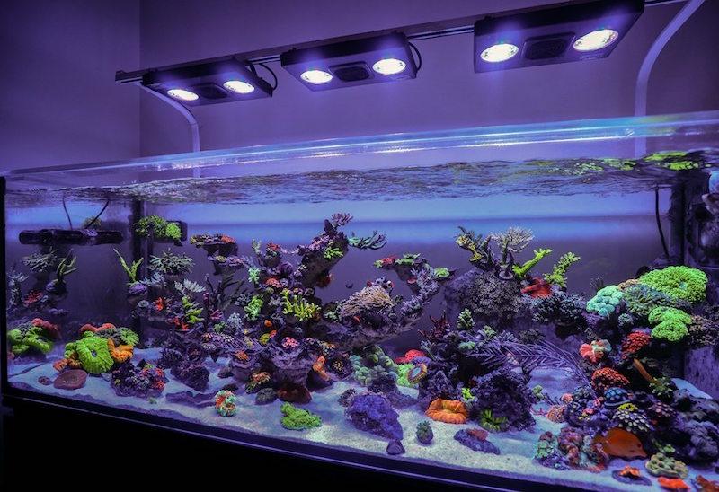 Cara Membuat Dan Merawat Aquarium Laut Untuk Pemula Inreview Id