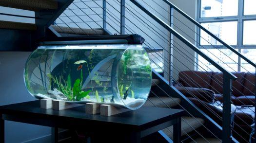 aquarium unik bawah tangga