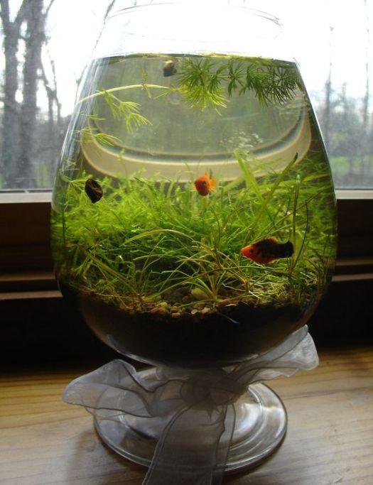Aquarium gelas anggur unik