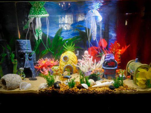 Hiasan Aquarium Rumah Buah