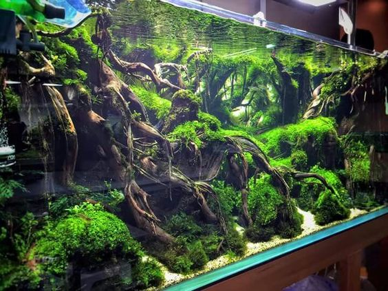 Aquarium besar: Aquascape Jungle Style