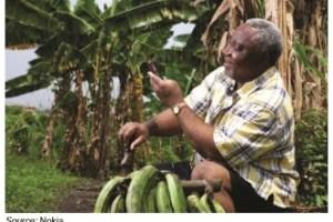 Ilustrasi petani kecil. Memanfaatkan teknologi informasi dengan ponsel.