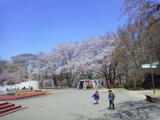 cherry blossom viewing with kids kitamoto park Saitama