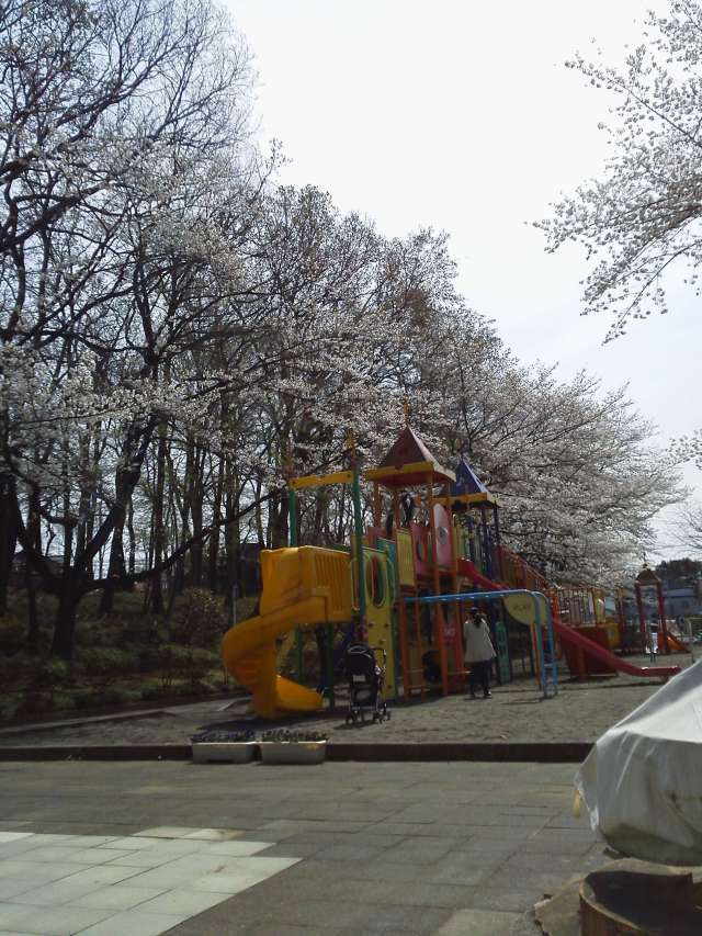 Cherry blossom viewing with kids in the toddler section of Kitamoto Children's park