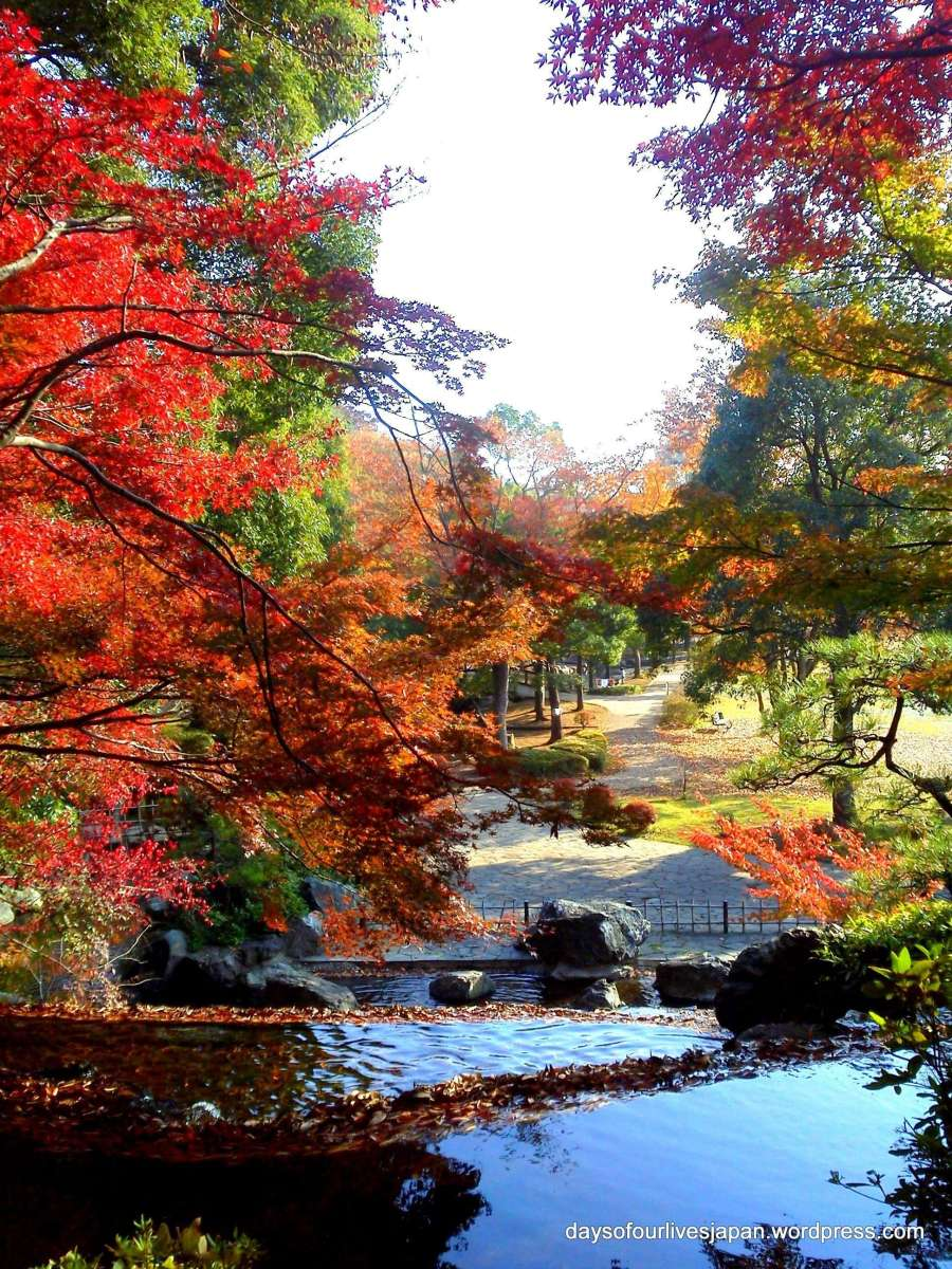 Autumn scenery in Saitama, Japan