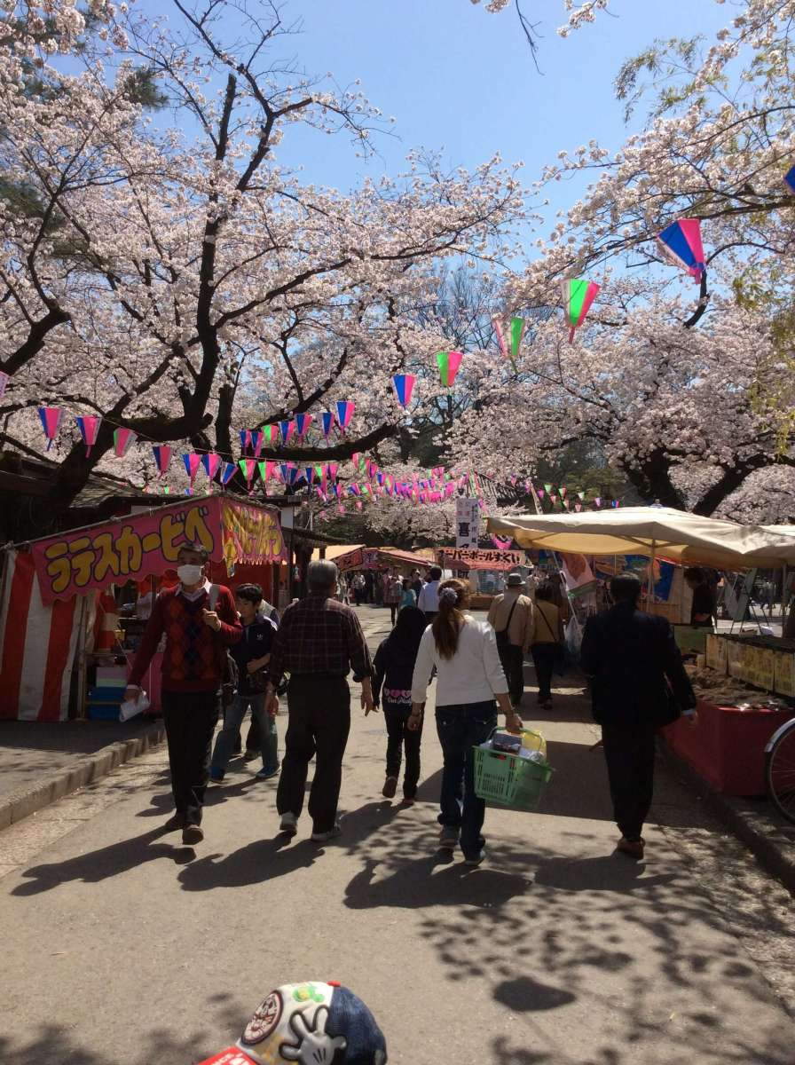 Cherry blossom festival at Kitain Temple