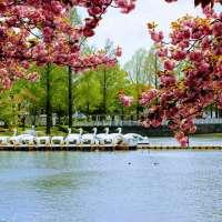 Kawagoe Water (Aquatic) Park