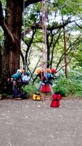 Treeing Tree climbing in Saitama