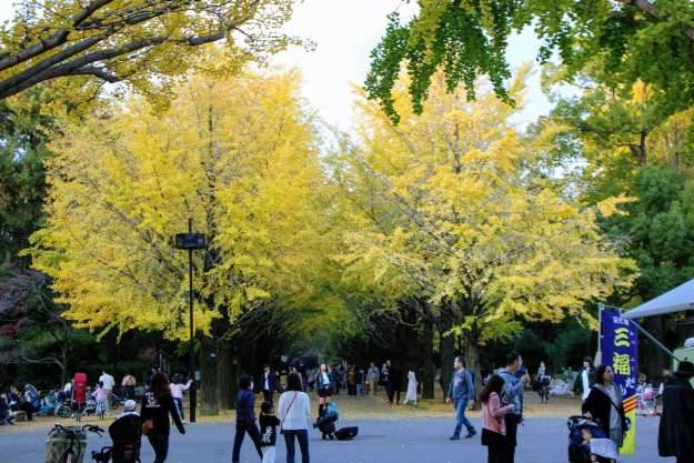 Hikarigaoka park and gymnasium | NERIMA