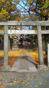 Gingko Trees at Ukishima Inari Shrine | Kawagoe