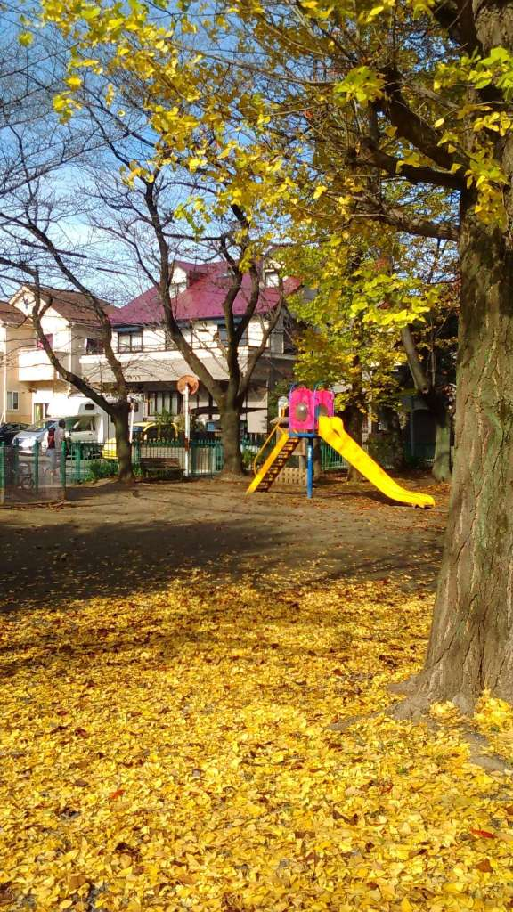 Gingko tree and golden carpet at Ukushima inari 2