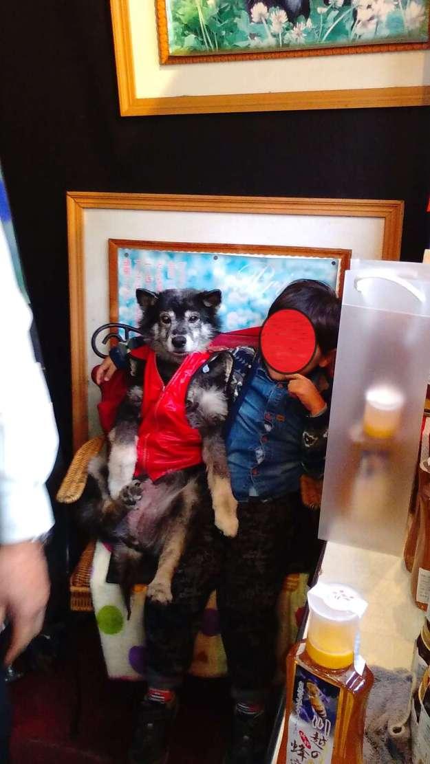 "Famous dog in Kawagoe ""Priya"", said to have magical powers!"