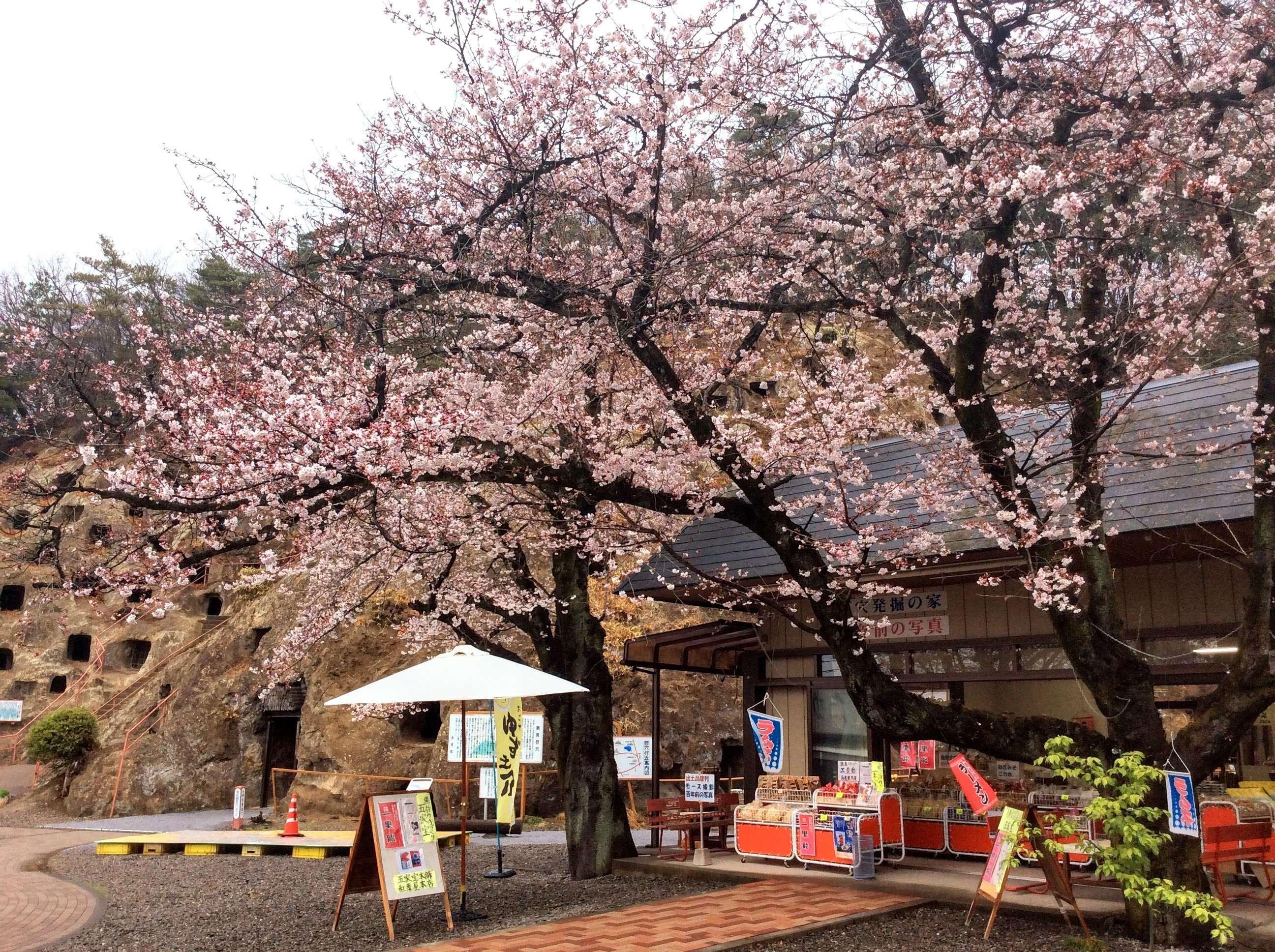 100 caves of yoshimi cherry blossom festival