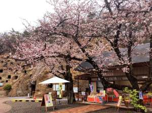 100 caves of yoshimi cherry blossom festival