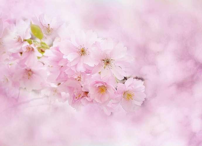 Hanami BBQ at Shinrin and Iwatsuki Castle Park Cherry Blossom festival