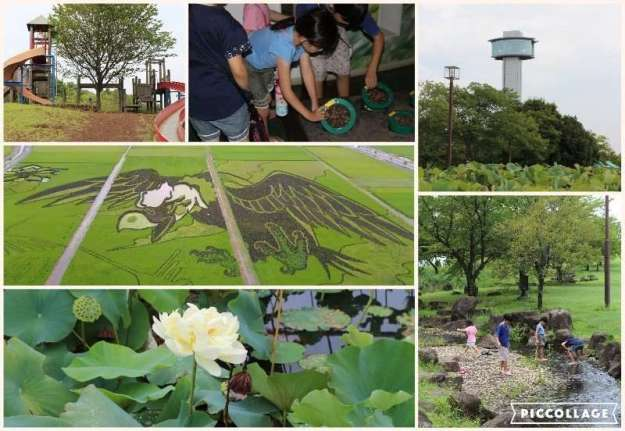 Rice Field Art and Ancient Lotus: Kodai Hasu No Sato | GYODA