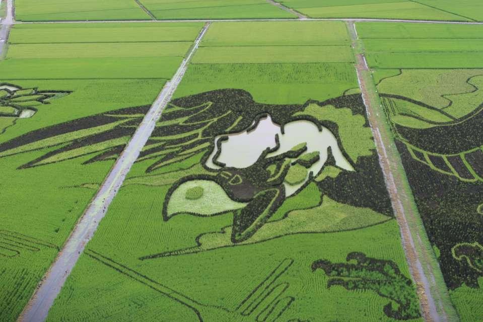 Condor Rice Paddy Art Gyoda