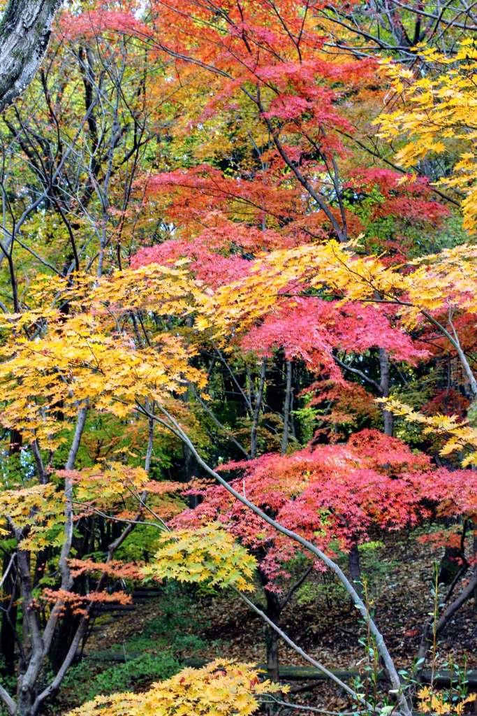 Monomiyama Park Higashimatsuyama
