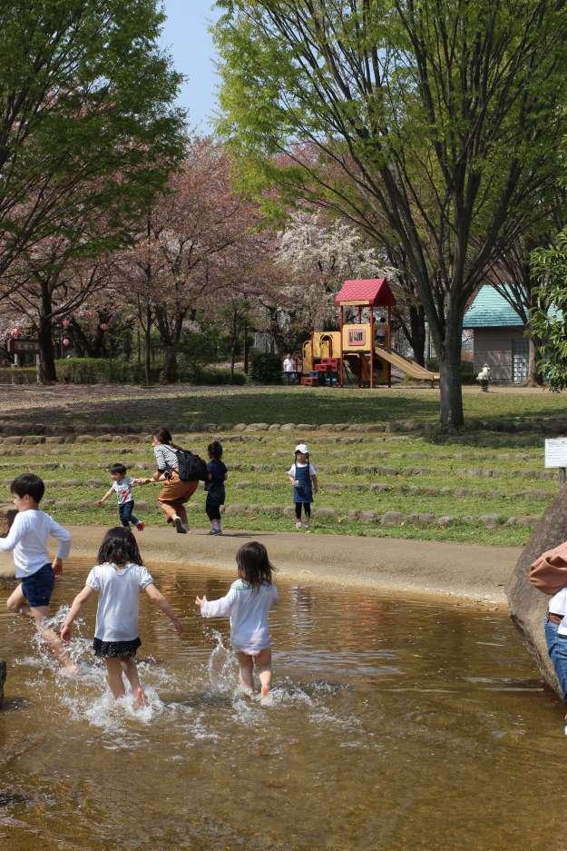 Cherry Blossoms and Splash pool | TSURUGASHIMA