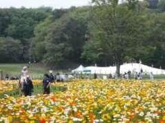 Horse riding poppy fields