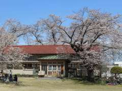 Shimozato Elementary school from Non Non Biyori anime and famed for cherry blossoms