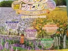 Happy Spring Festa Shinrin Park