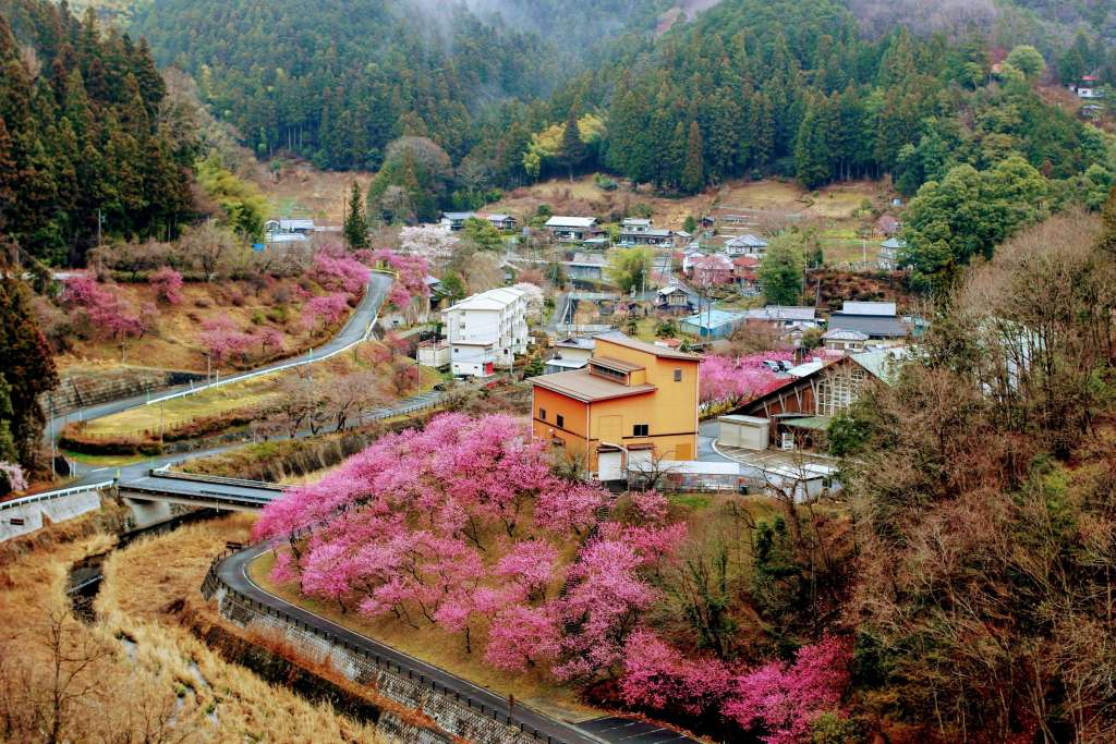 Peach Blossoms Yoshida Chichibu Ogano Rocket Town Biomass generator facility in view