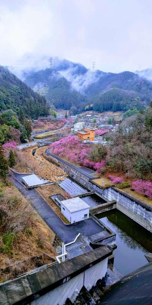 Peach blossoms and river from Kakkaku Dam copyright insaitama.com chichibu rocket town yoshida saitama japan
