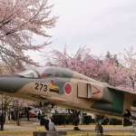 An air base cherry blossom festival in Saitama Prefecture, more info on insaitama.com
