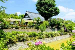 Hydrangea Temple Kinsenji | RANZAN