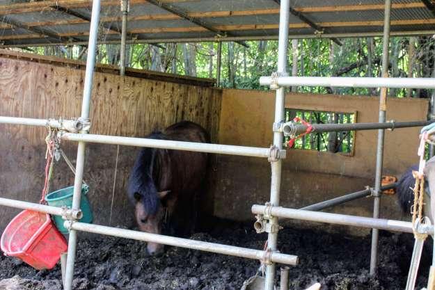 Horses at Togetsuen
