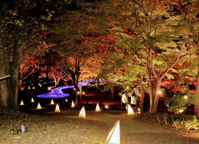 The story of the forest and the lights Shinrin Park Musashi Kyuryo National Government Park Namegawa