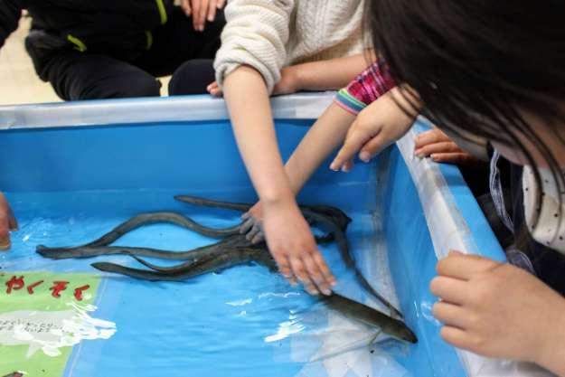 Touching eels at the Saitama Aquarium