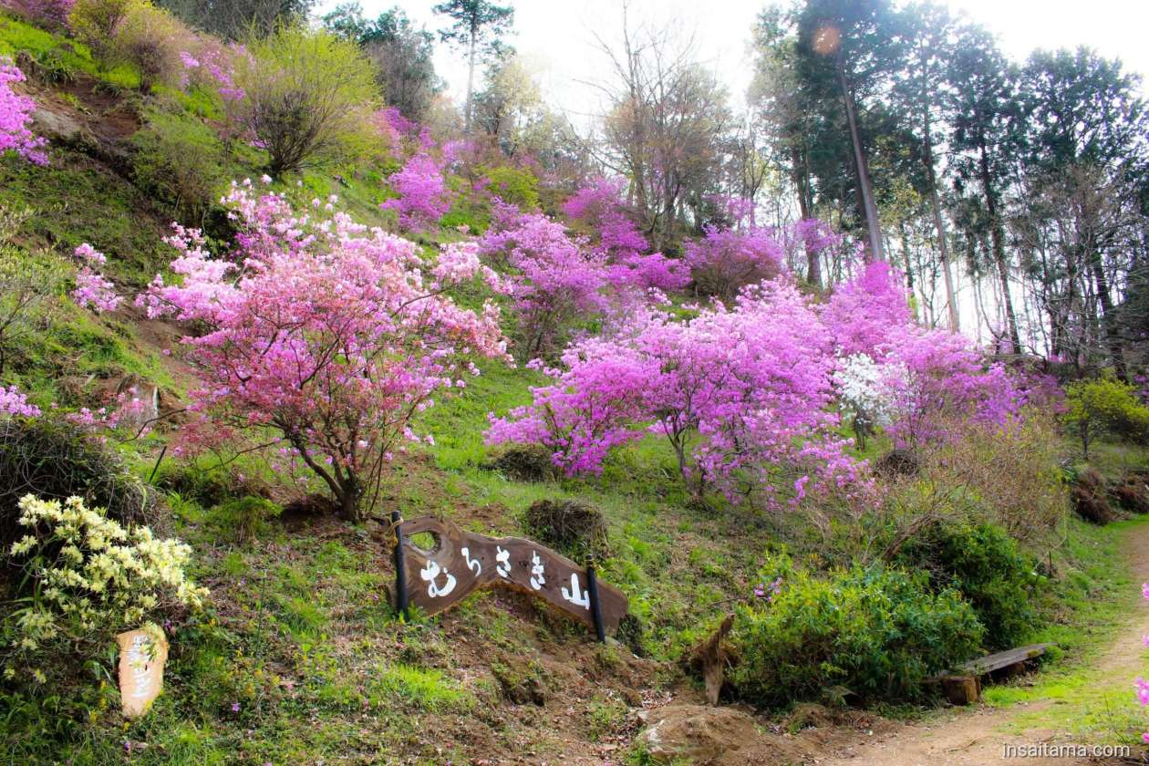 Purple Mountain Murasaki Yama