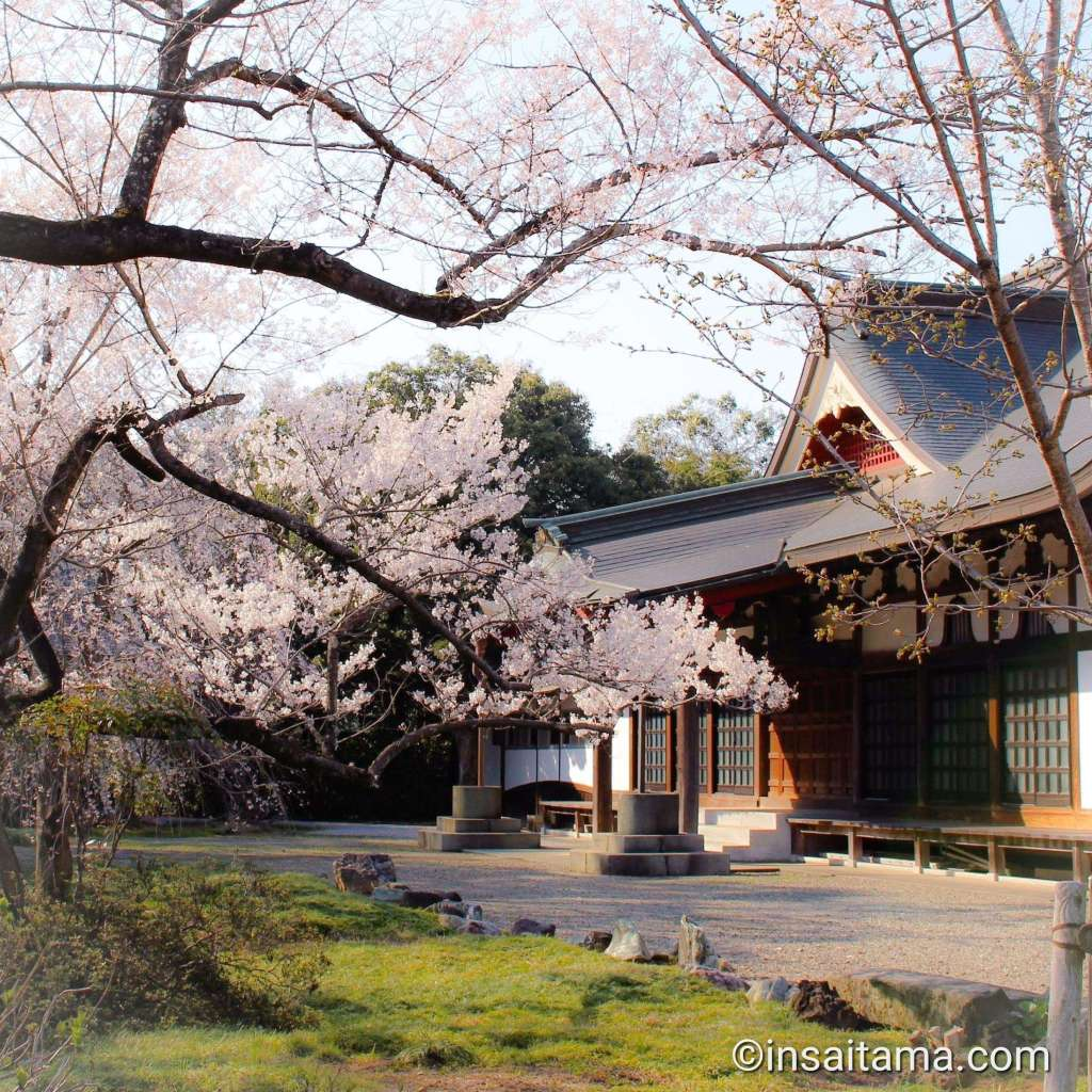 cherry blossoms at a temple in Kawajima