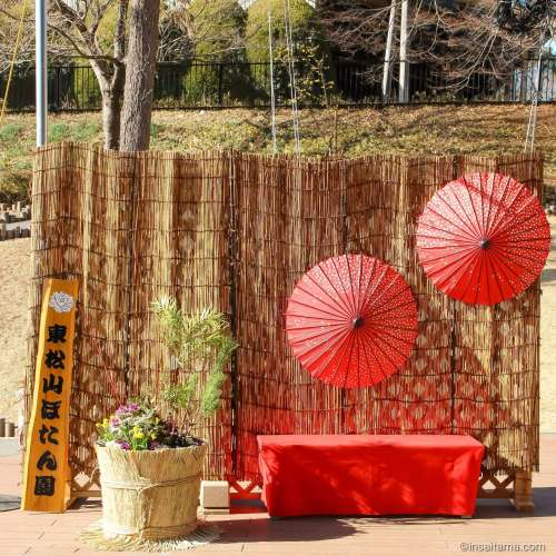 New Year display at Higashimatsuyama Botanen with Japanese brolleys
