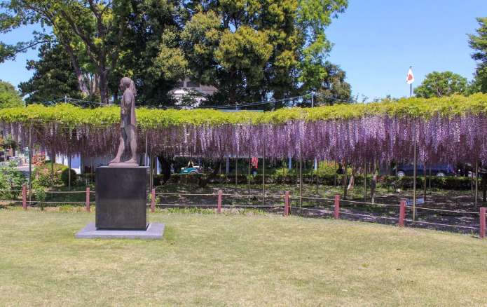 aobaen wisteria