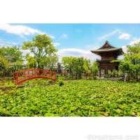 Kawagoe's Ancient Lotus Temple