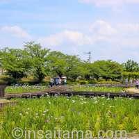 Photo Friday: Iris at Yamazaki Park | FUJIMI