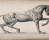 """Atların Kitabı  """"Baytarname"""""""