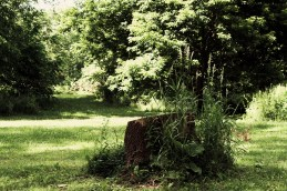 Stump in our nook