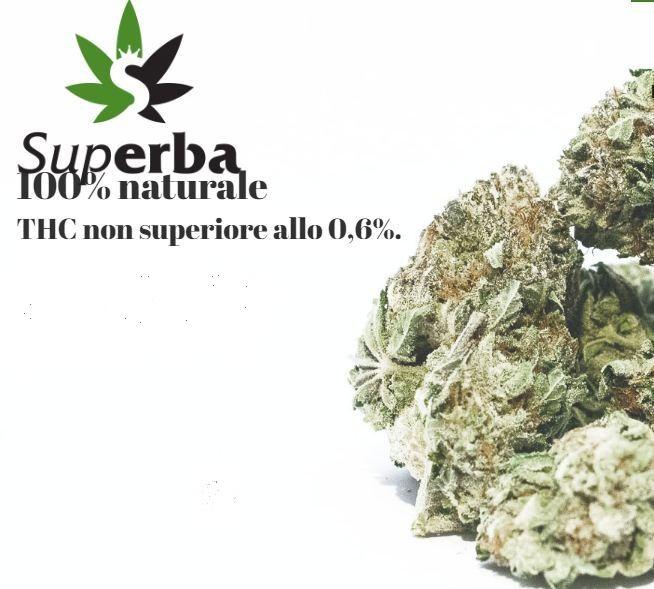 Azienda-Superba.jpg?fit=654%2C589&ssl=1