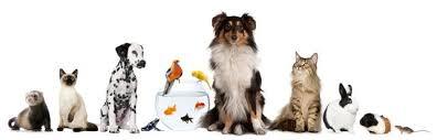 immagine-articolo-ottobre-animali-e-condominio.jpg?fit=396%2C127&ssl=1